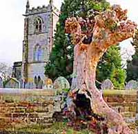 Ancient Yew outside the Church of St Michael